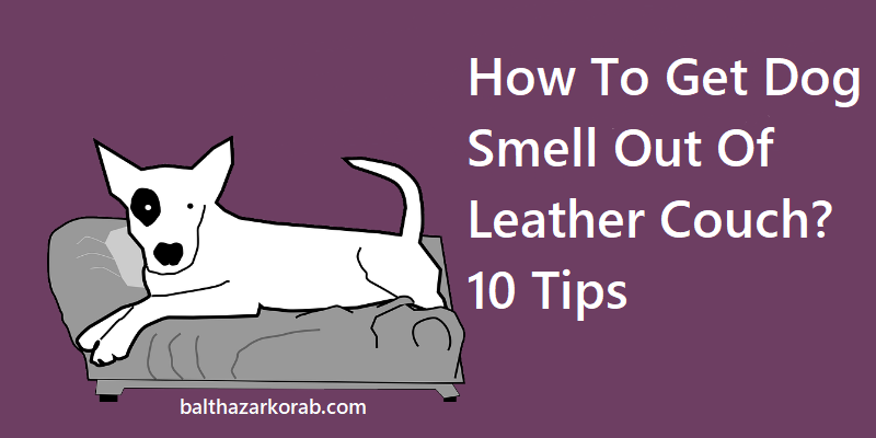how to get dog smell out of leather couch